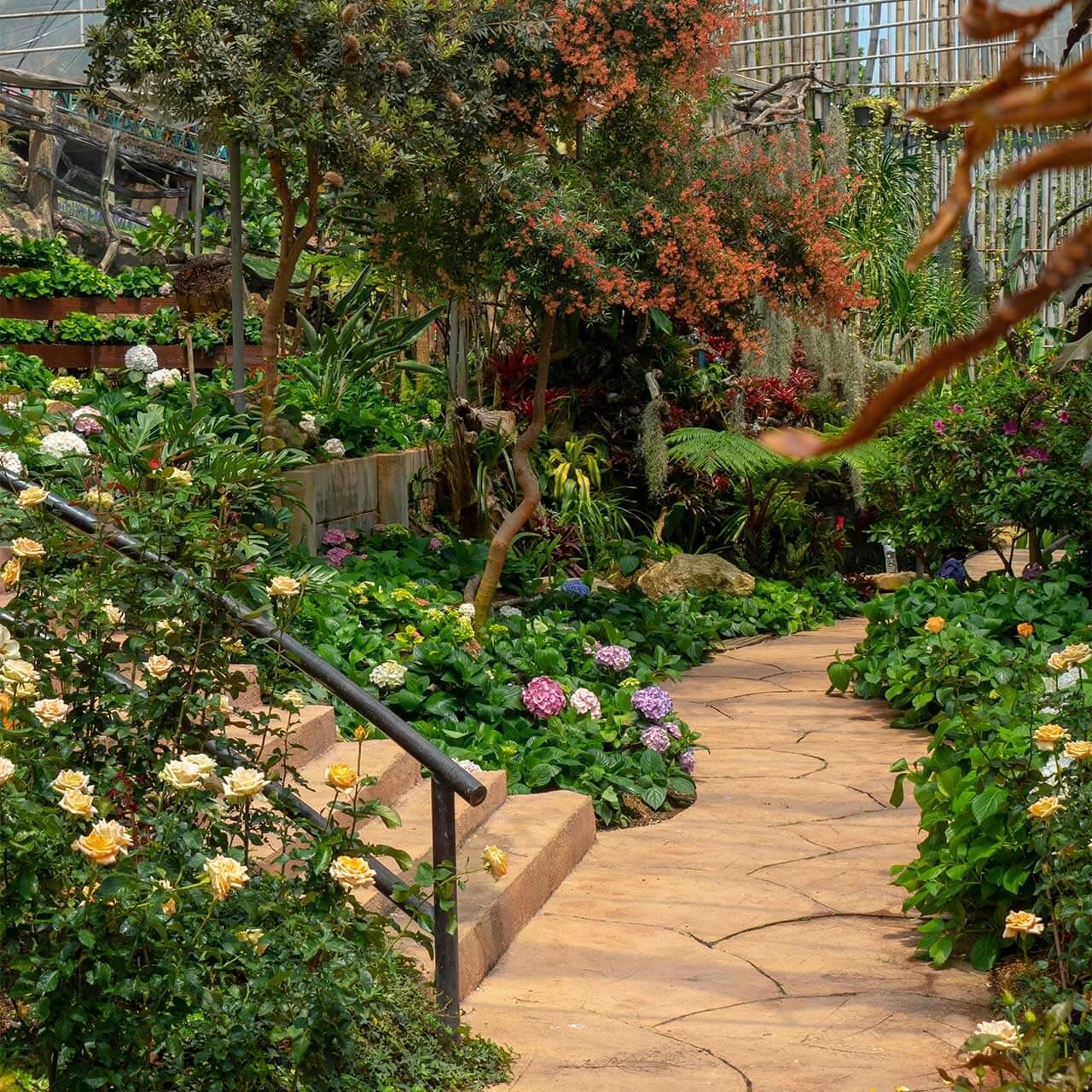 garden4_pic22
